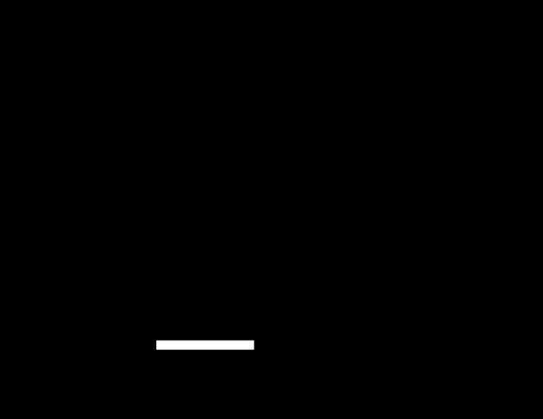 Glamping Trailer Layout Diagram